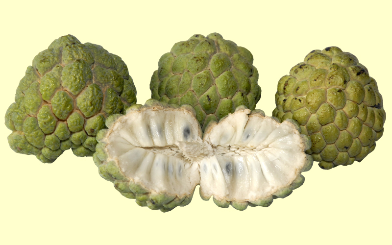 Custard Apple - Benefits Across Ages